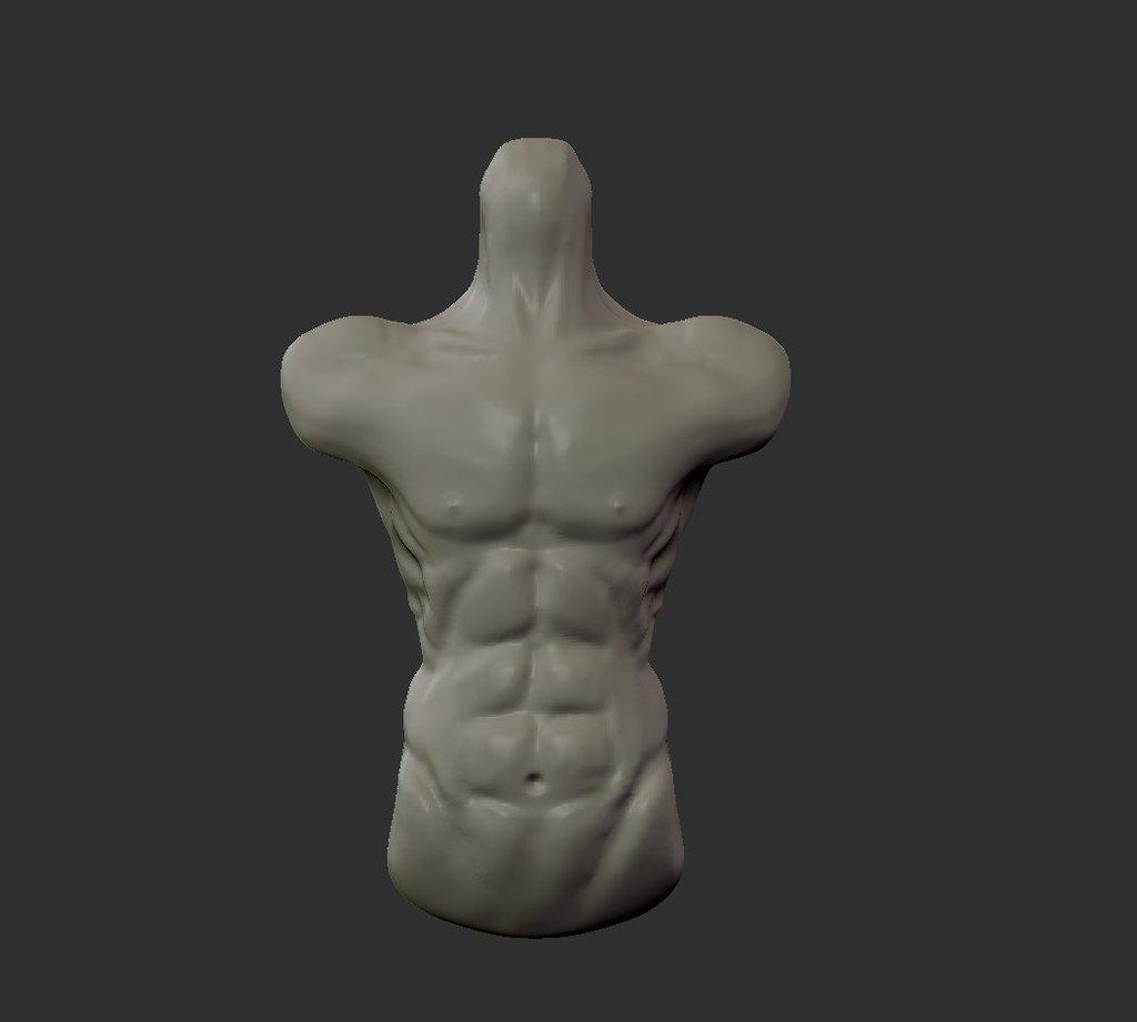 アナトミー 胴体