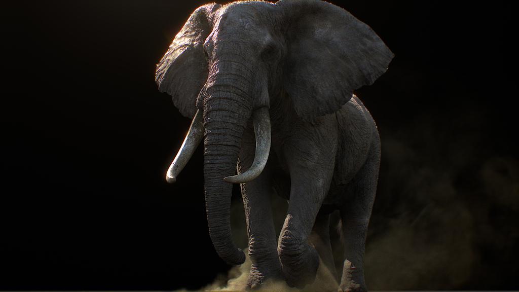 LiNDA ZOO 「Elephant」