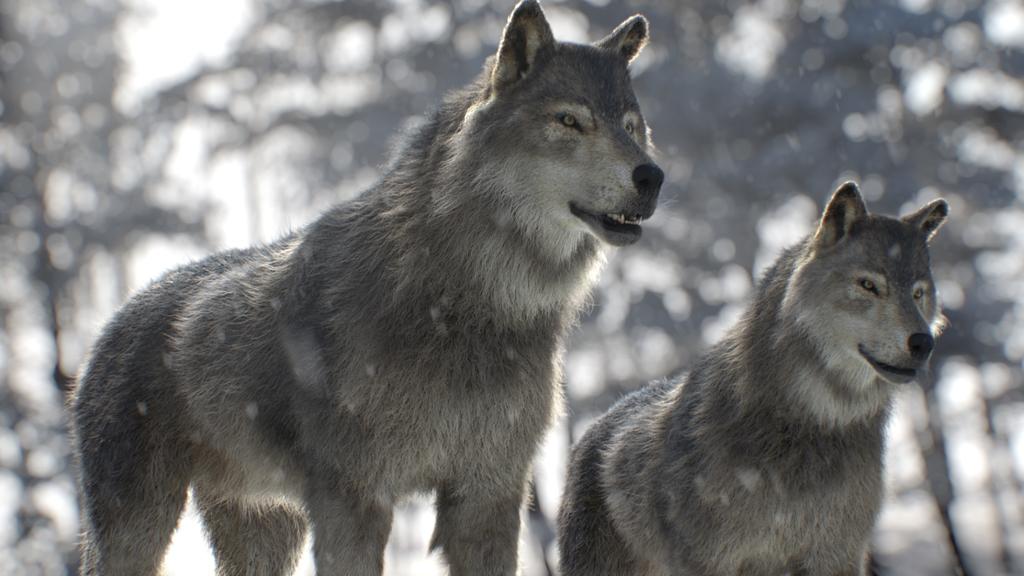 LiNDA ZOO 「Wolf」