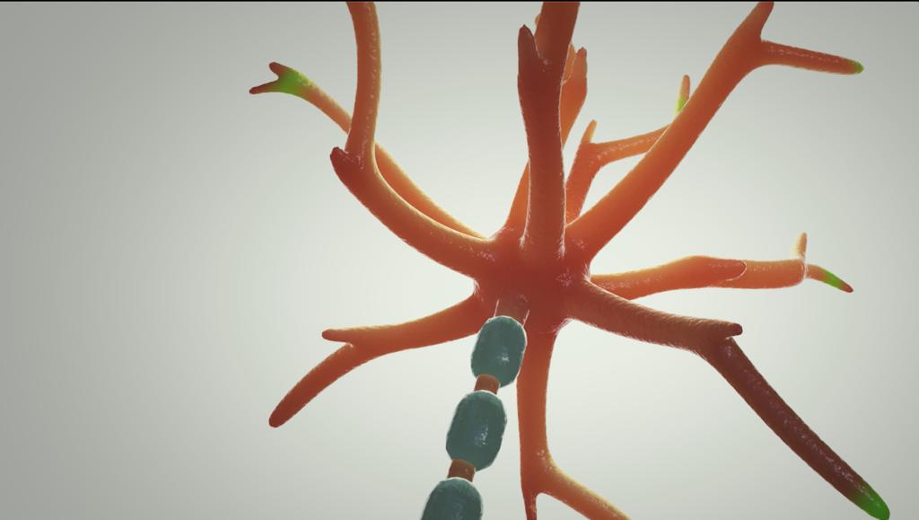 ニューロン内の情報伝達のしくみ