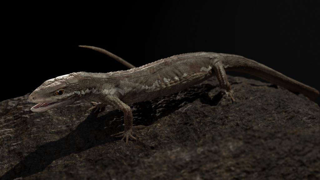 Takydromus tachydromoides (Japanese Grass Lizard)